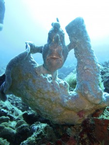 Frogfish at Siamil